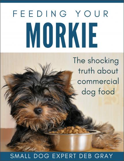 Feeding Your Morkie
