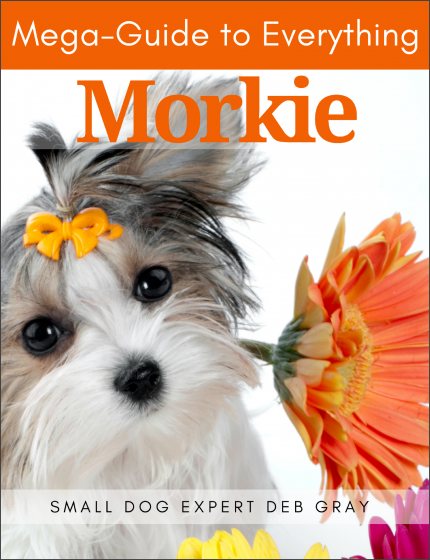 Mega Guide to everything Morkie