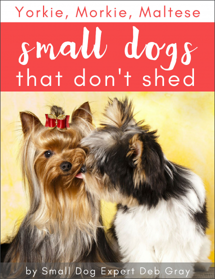 Yorkie-Morkie-Maltese-Small-dogs-that-don't-shed-BOOK-COVER
